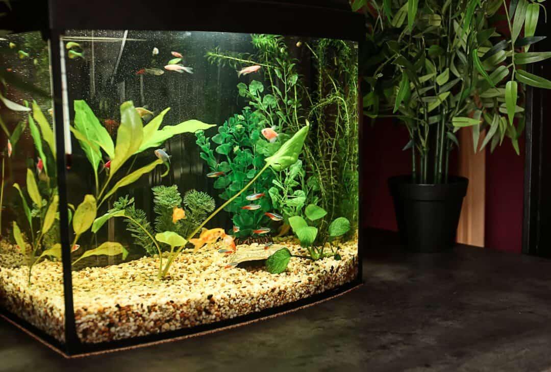 Stocking 10 Gallon Fish Tank