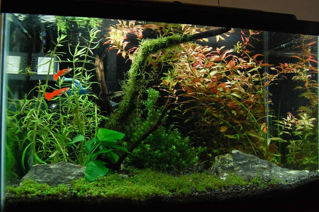 7 Beautiful Background Aquarium Plants Aquariadise