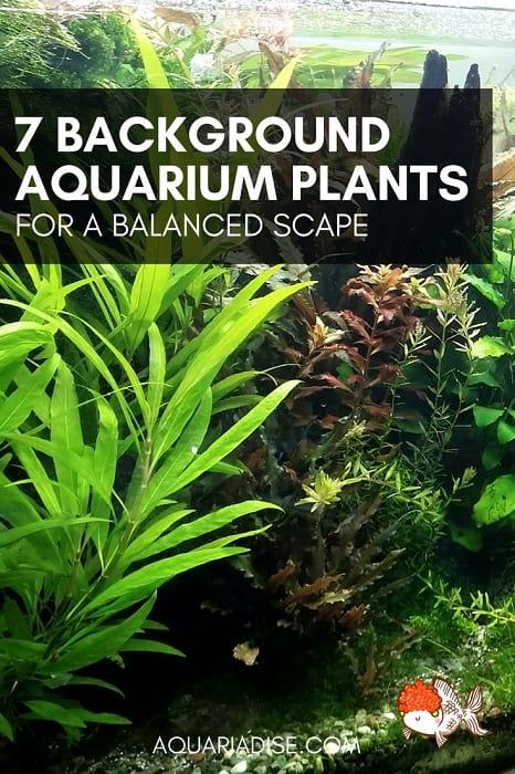 7 background aquarium plants | For balance & depth!