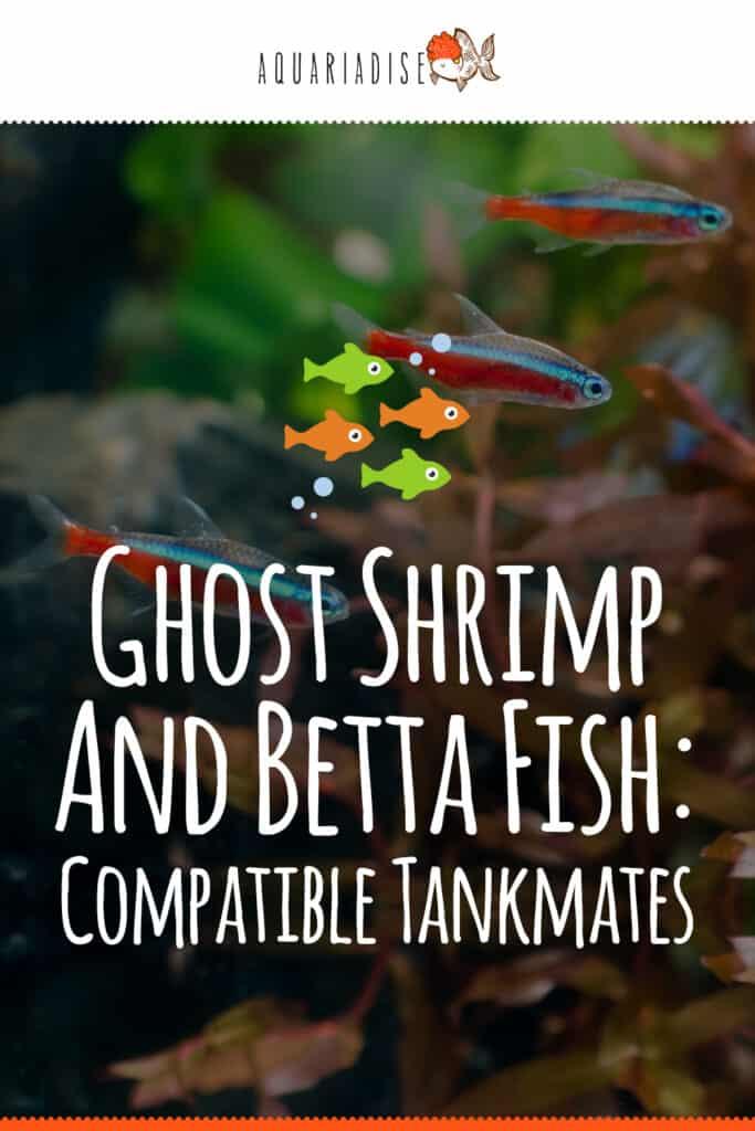 Betta and Shrimp Tankmates