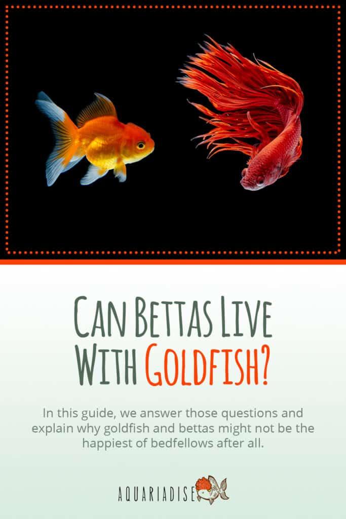 Betta Fish Tankmates