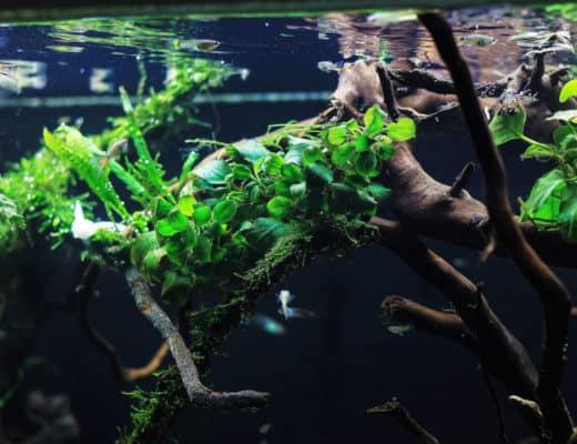 brackish plants
