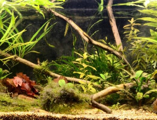 Hardy Plants for Brackish Aquarium