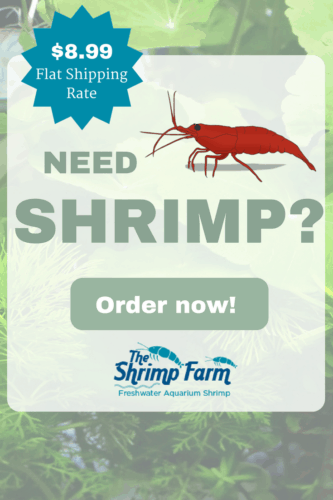 Click for shrimp!