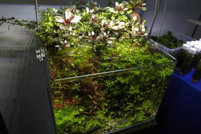 emersed aquascape
