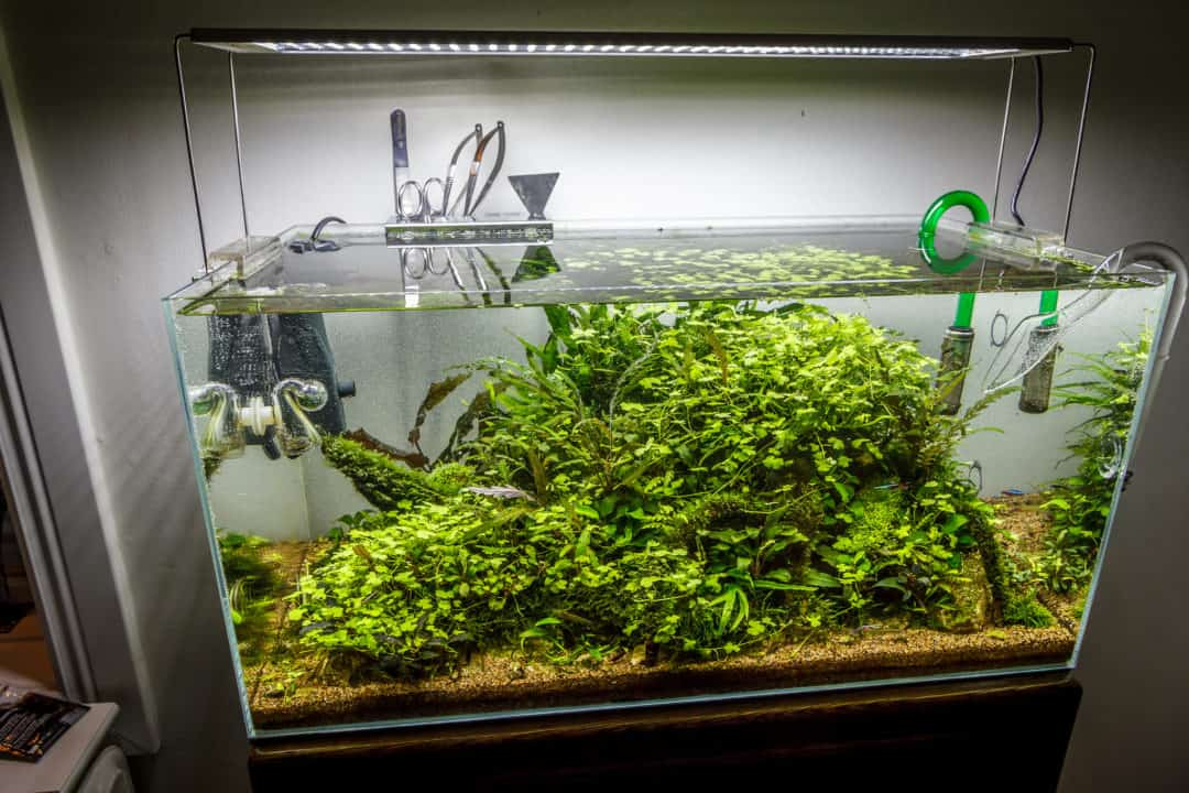 basic aquascaping