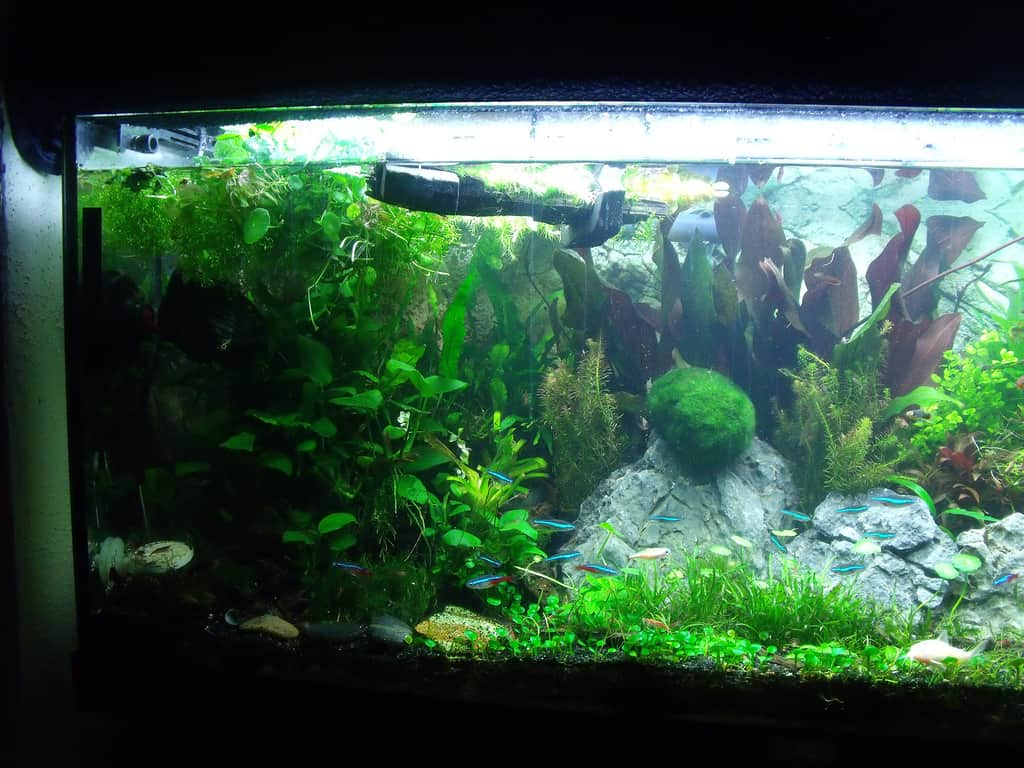 How to set up a low tech planted aquarium aquariadise for Low maintenance fish tank