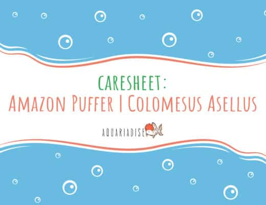 Caresheet Amazon Puffer Colomesus Asellus