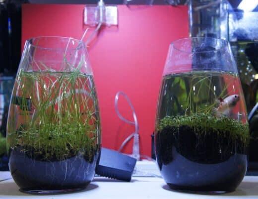 Fishbowl Alternative