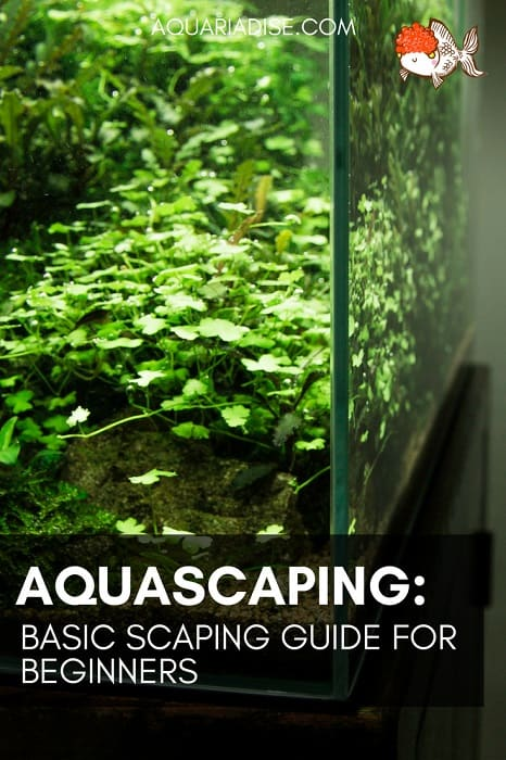 A Basic Guide To Aquascaping Landscaping Inside Your Aquarium