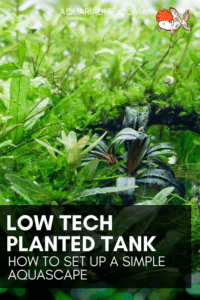 Setting up a low tech planted tank | Easy aquascape tips!
