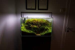 Wondering how to light an aquarium? This guide contains everything you need to know! #fishtank