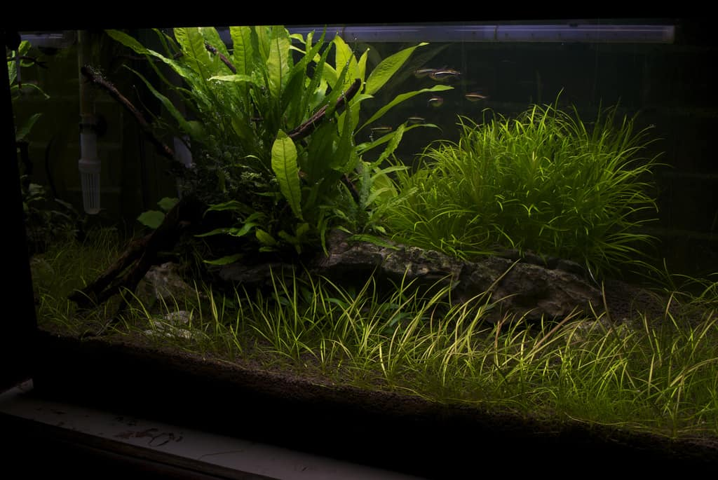 9 Most Useful Low Light Aquarium Plants Easy Care And Budget Friendly
