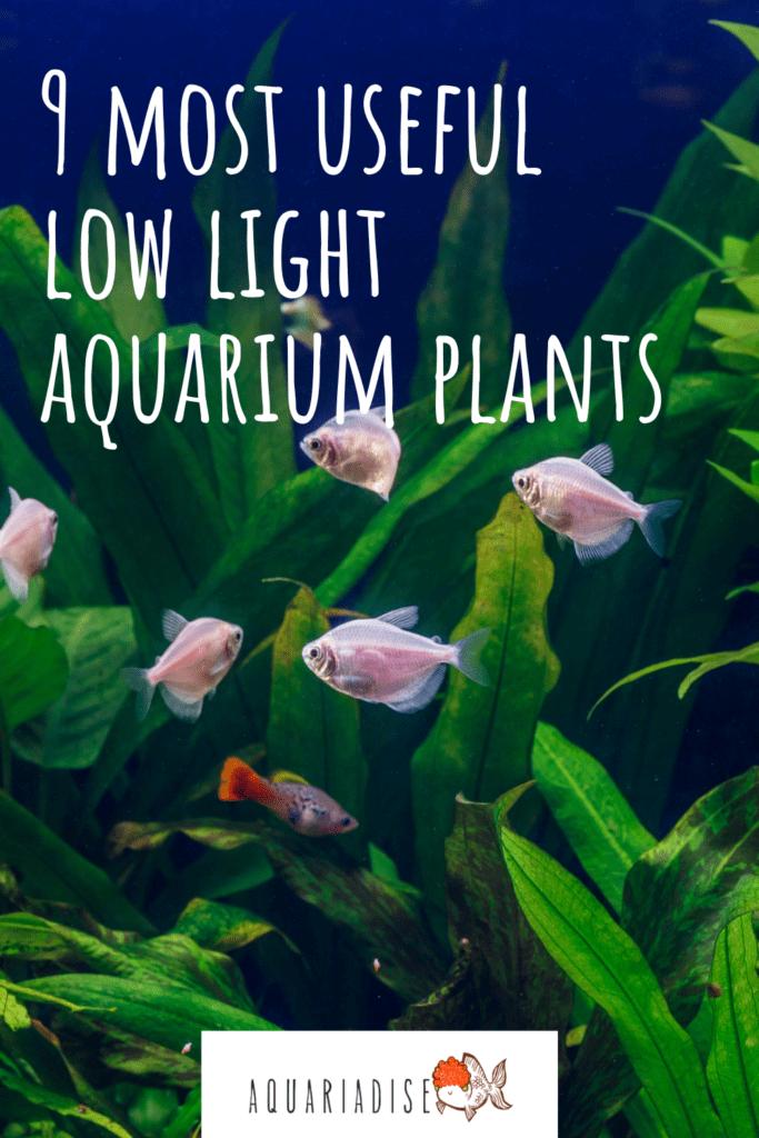 9 Low Light Aquarium Plants