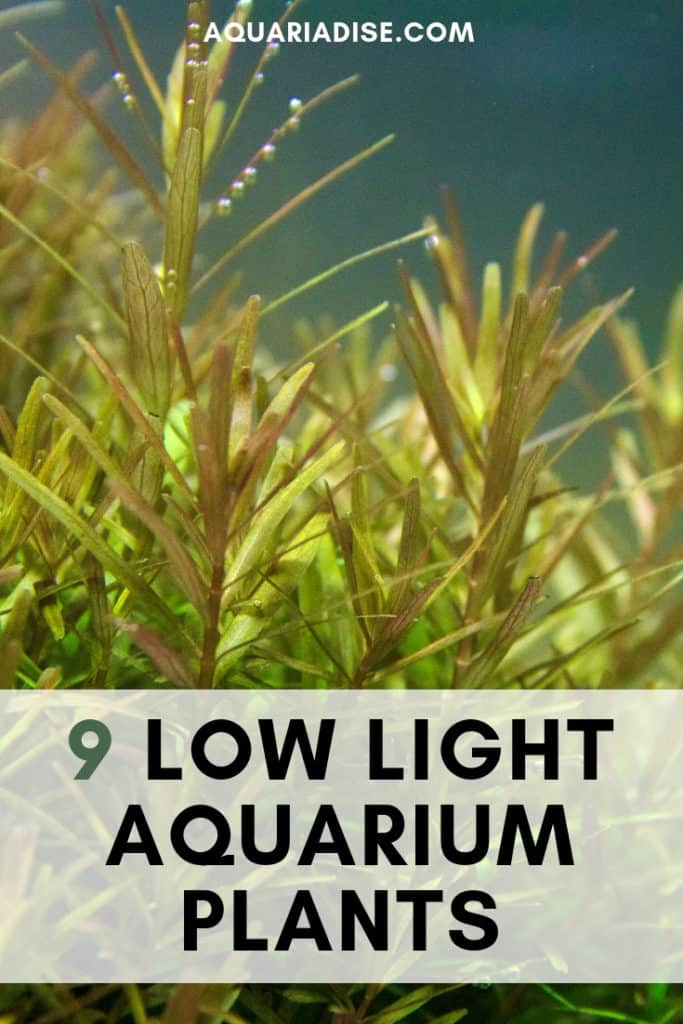 9 low light plants for your low tech aquarium!