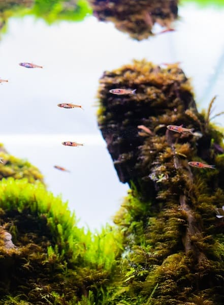 Wondering which fish you can and can't keep in a 5 gallon aquarium? The article on <a href=