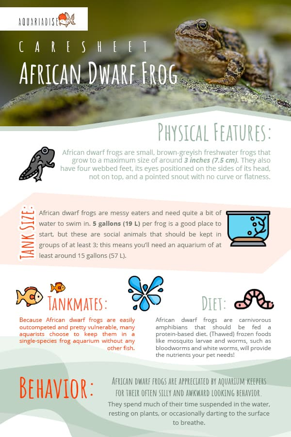 African Dwarf Frog Care Guide
