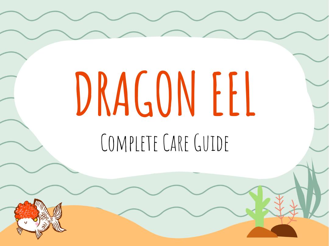 Dragon Eel