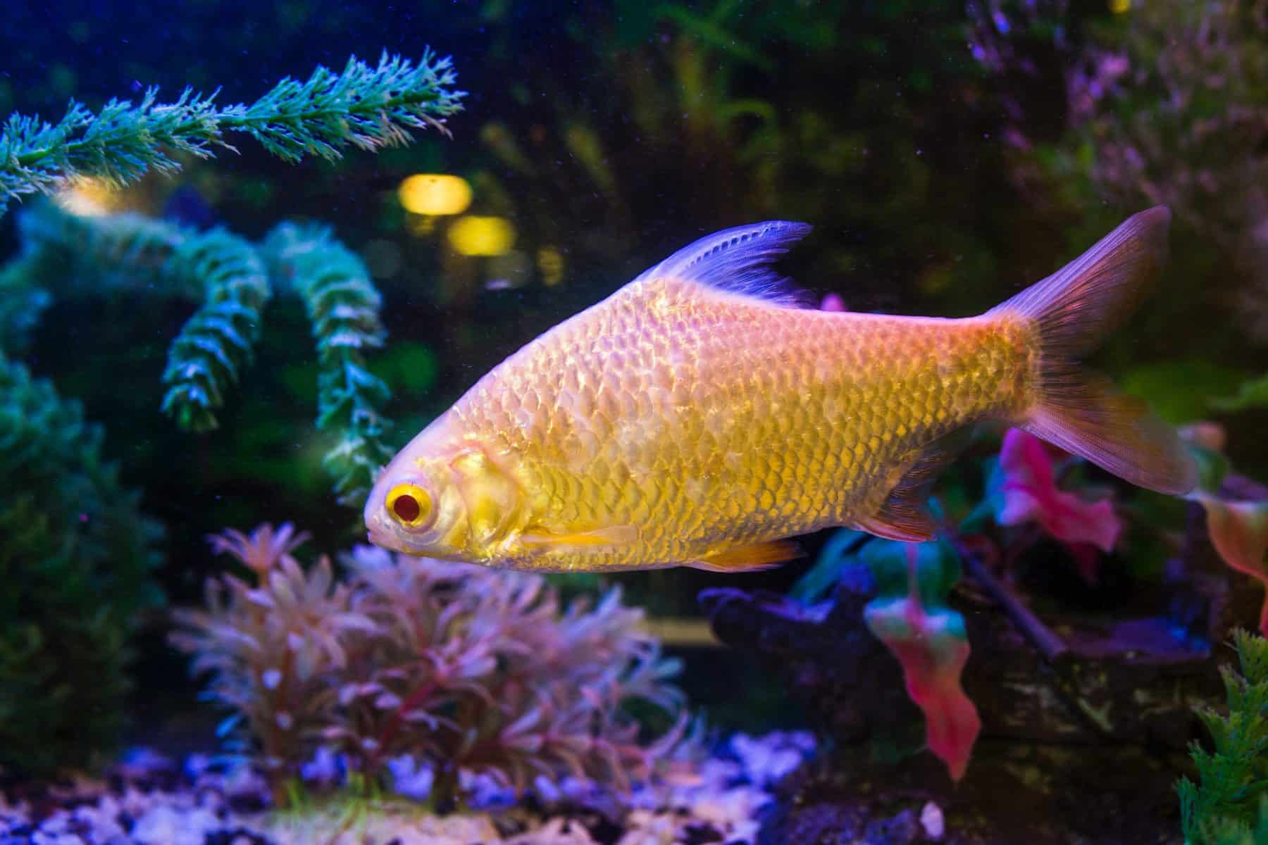The Ultimate Care Guide For Golden Wonder Fish