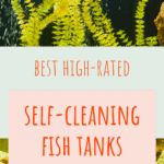 Self Cleaning Fish Tanks