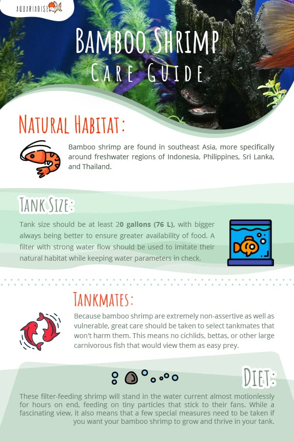 Bamboo Shrimp Care Guide