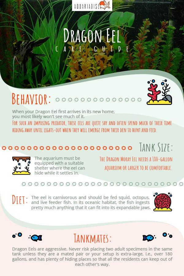 Dragon Eel Care Guide