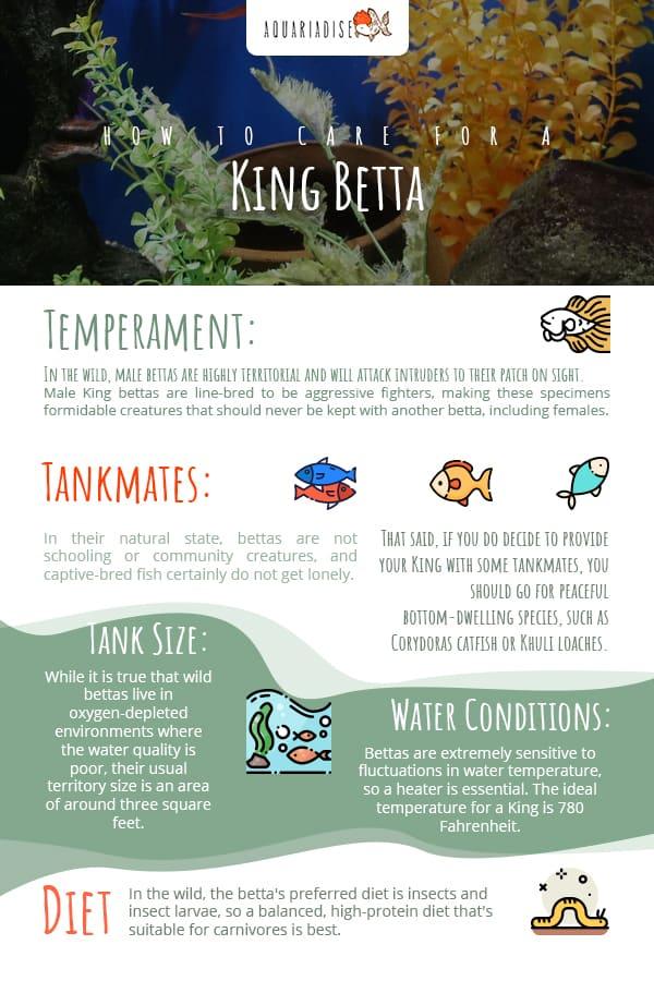 King Betta Care Guide