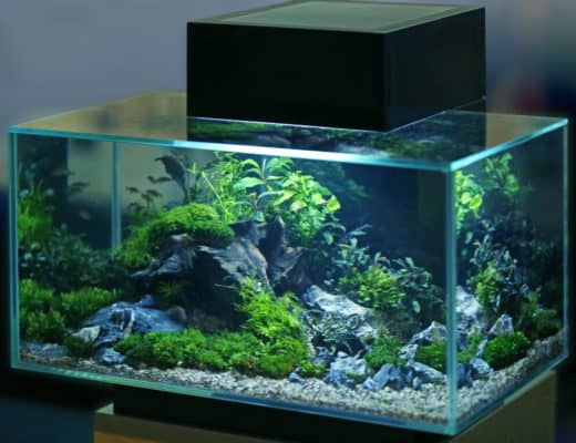 Top-Rated Aquarium Sump