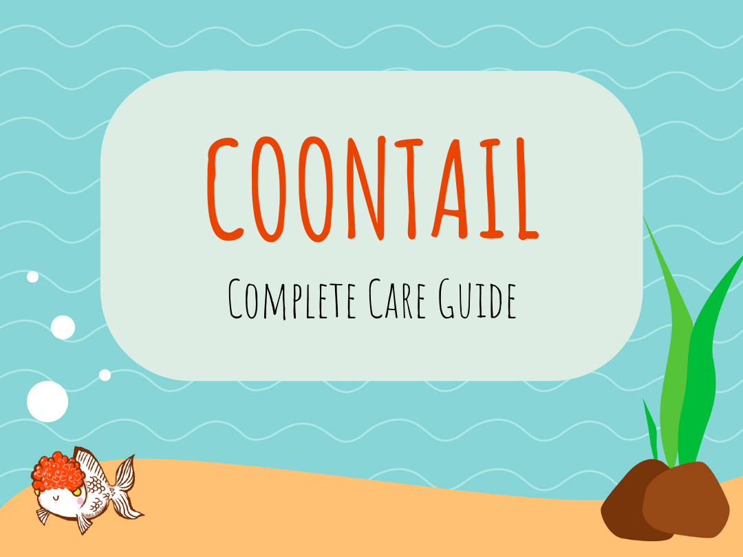 Coontail Plants: How This Plant Can Benefit Your Aquarium