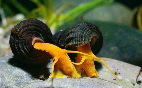 How To Care For The Large Rabbit Snail