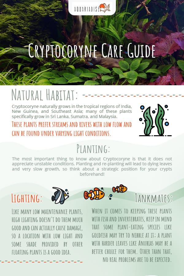 Cryptocoryne Care Guide