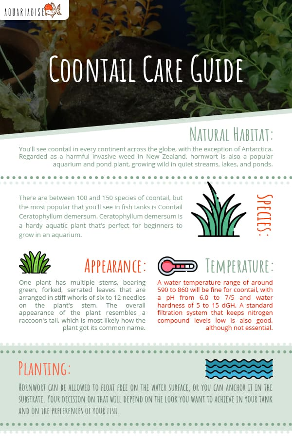 Coontail Care Guide