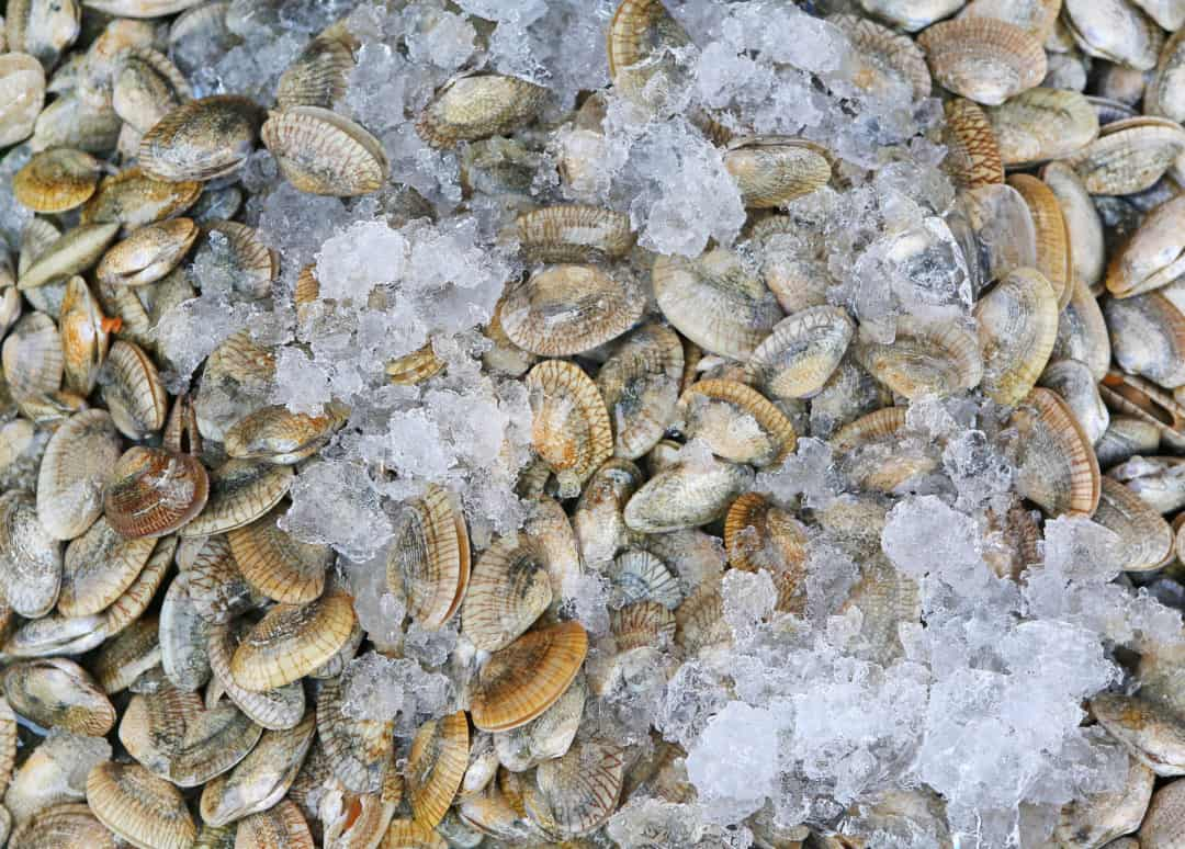 Freshwater clams and mussels