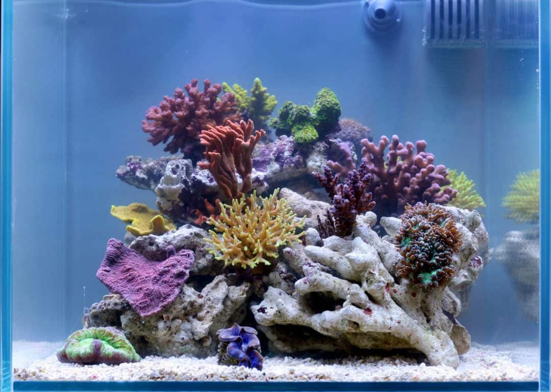 2.5 Gallon Fish Tank