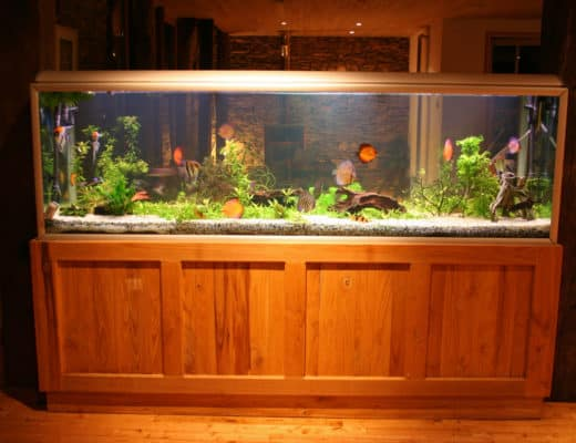 200 Gallon Fish Tank