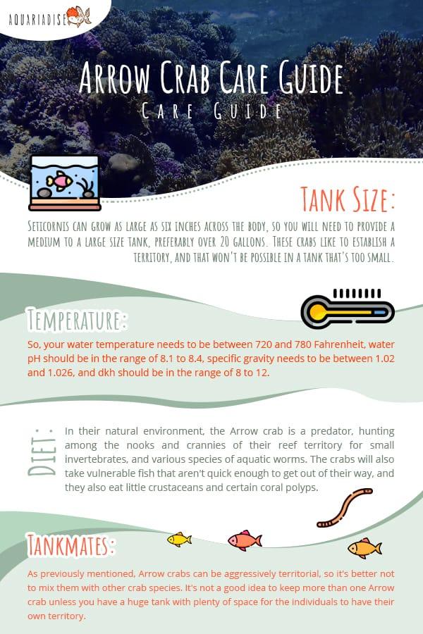 Arrow Crab Care Guide