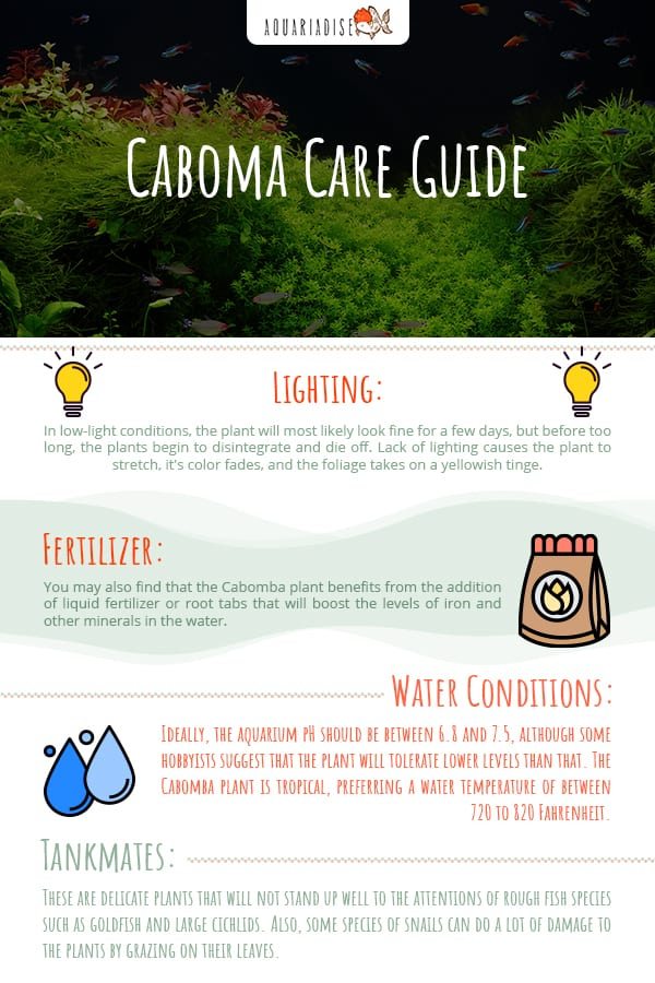 Caboma Care Guide