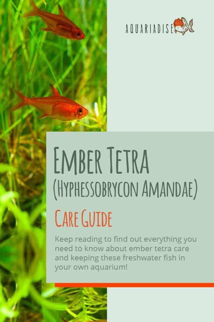 Ember Tetra Care Sheet