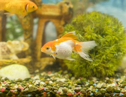 aquarium gravel filter