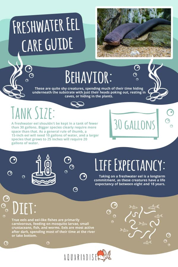 Freshwater Eel Care Guide