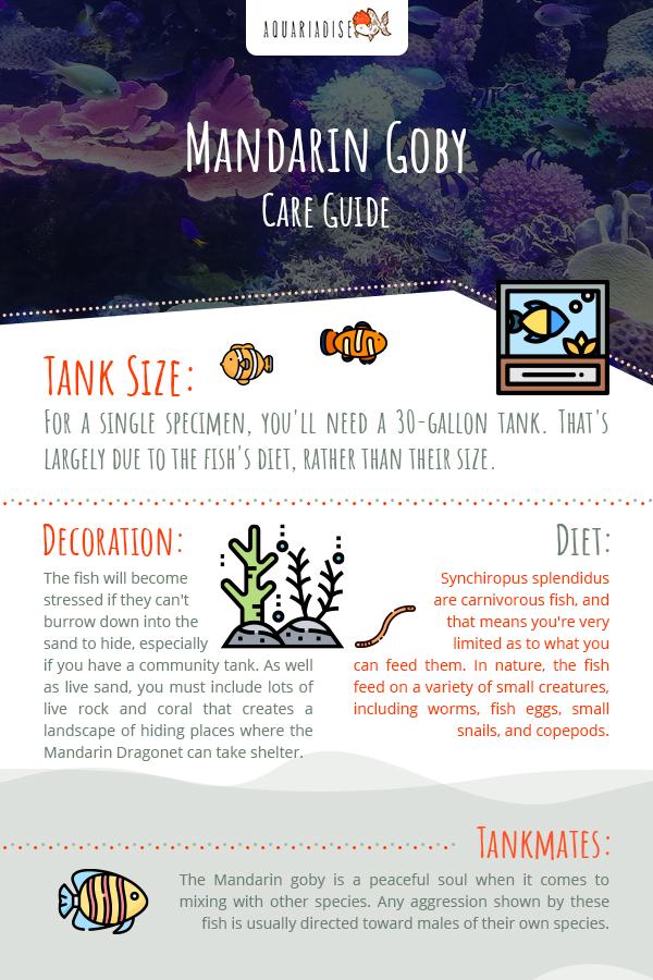 Mandarin Goby