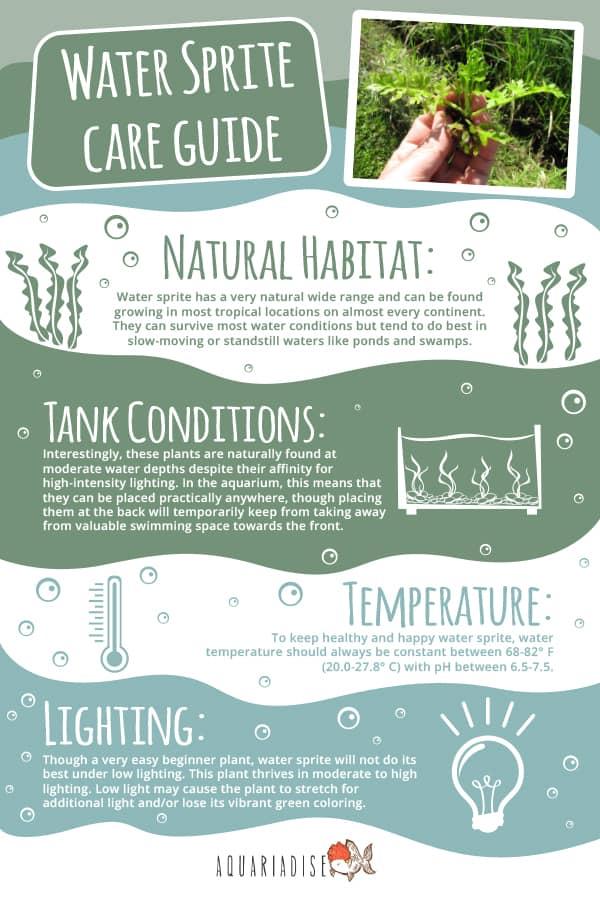 Water Sprite Care Guide