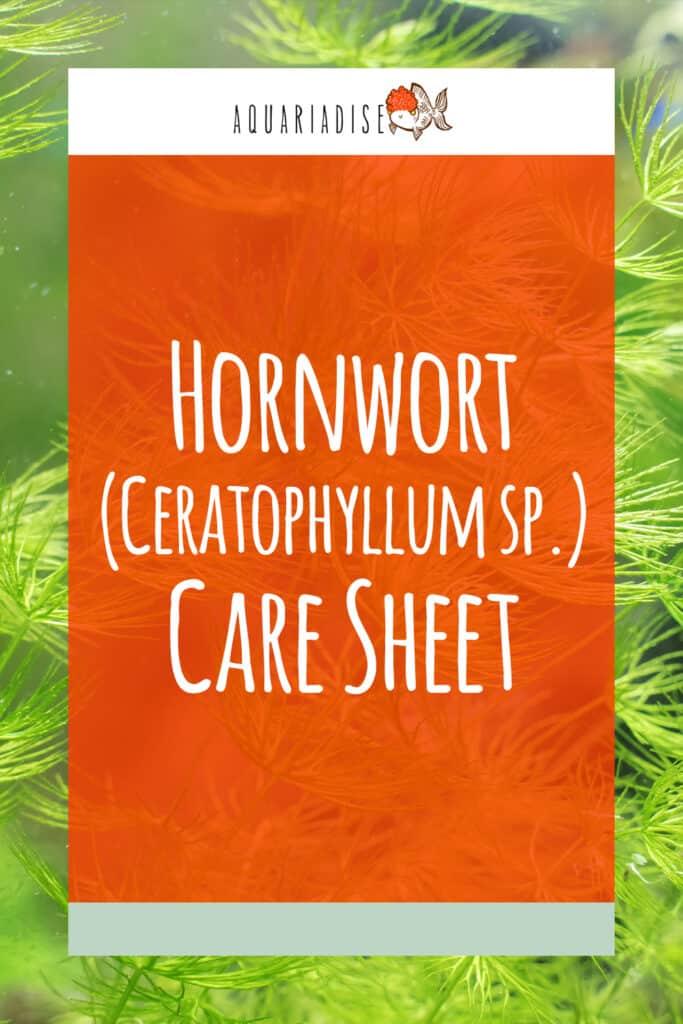 Hornwort Care Sheet