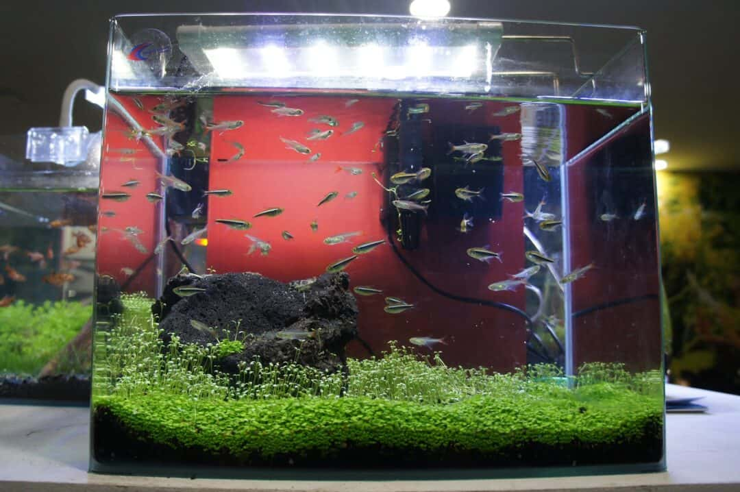 10 gallon fish tank with small fishes