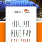 Electric Blue Hap Care Sheet