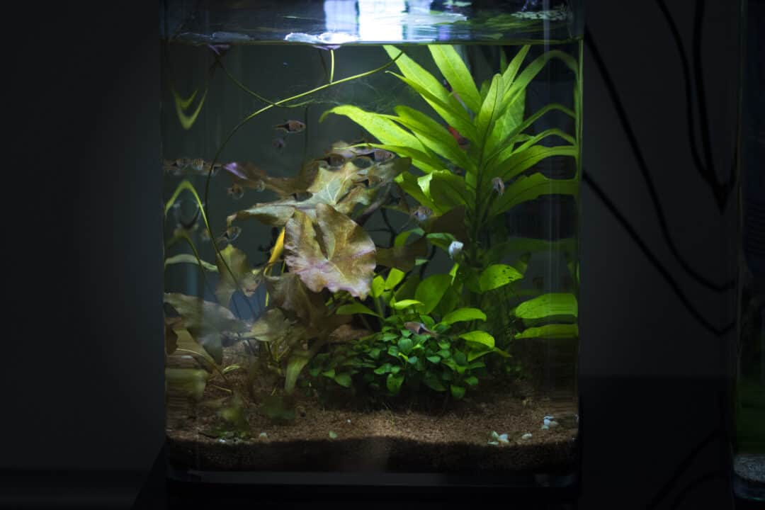 5 gallon freshwater fish tank