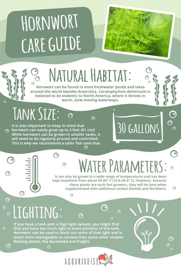 Hornwort Care Guide