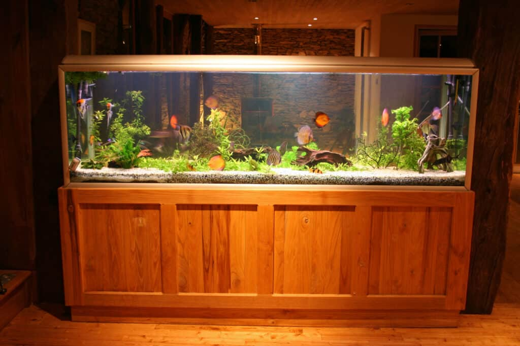 front view of 55 gallon fish tank during at night