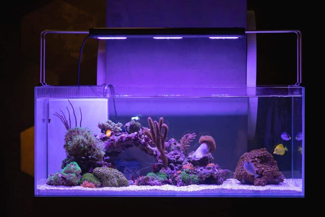 40 gallon breeder tank with corals