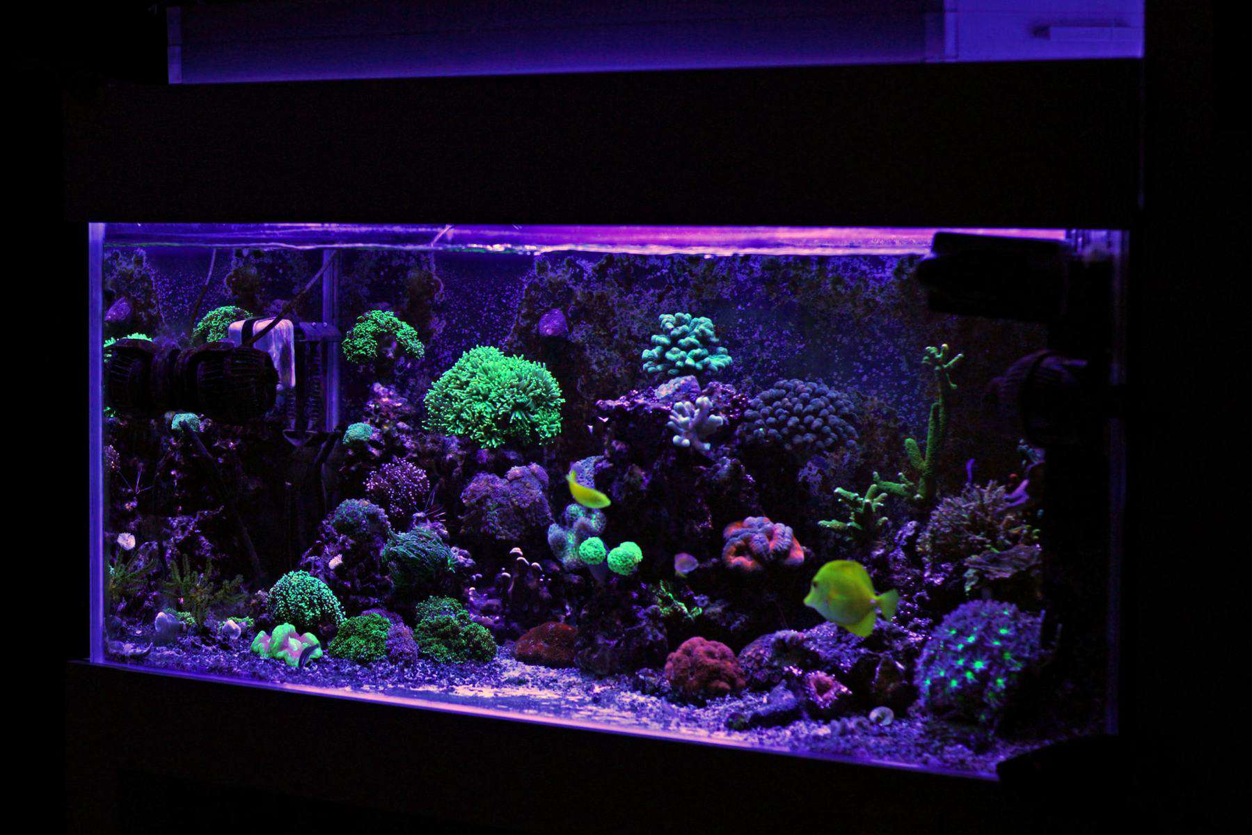 40 gallon breeder tank with saltwater coral reefs